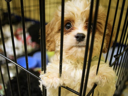 Dogs rescued at the Licking County Humane Society