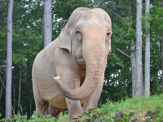 Abused Elephant Finds Sanctuary In Hohenwald Tennessee