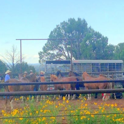 Options examined to save confiscated Alto wild herd