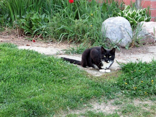 Our late barn cat as he waited for Bob to bring out