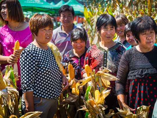 Female farmers and others watch a DuPont Pioneer field demo with a four-row combine harvester Wednesday, Sept 4, 2014, in China's Shandong Province.