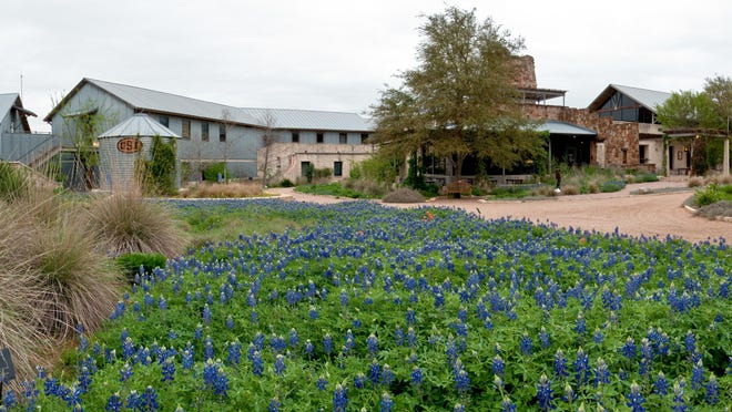 The Lady Bird Johnson Wildflower Center, shown with Texas bluebonnets in bloom, showcases more than 600 Texas native plants. The center closed Wednesday after an employee tested positive for COVID-19.