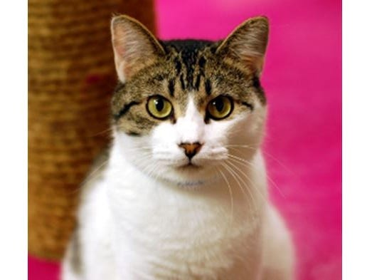The Des Moines Register and the Animal Rescue League of Iowa are excited to introduce you to Sassy!