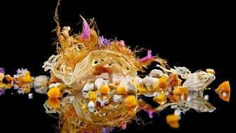 Alinea's Corn, White Chocolate, Honey, Mango is a whimsical work of art.