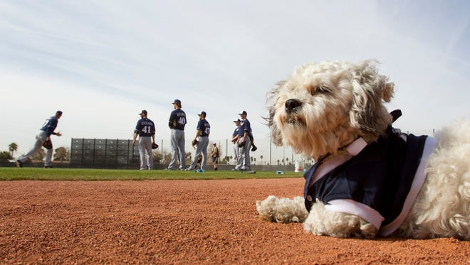 Hank the Dog is getting an extended engagement with the Milwaukee Brewers.