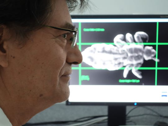 Professor Bernardo Arriaza with an image of a 7,000-year-old head louse found in a mummy's hair.