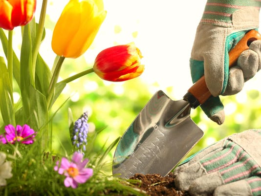 Perfect gardens in May a torment to procrastinators