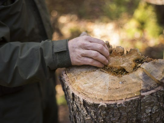 Ranger Jay Scott places his hand on a tree stump while checking on a campsite on Indian Lake. It is illegal to cut down trees but chopping fallen logs for firewood is allowed.