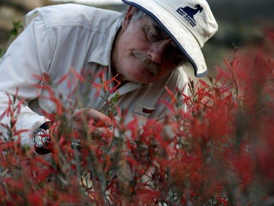 Stalking wildflowers in California's Anza-Borrego desert