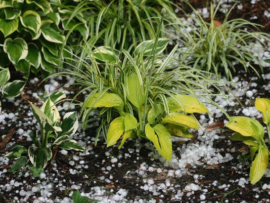 Gardening-Weather Resilient (2)