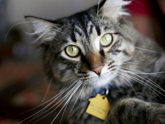 NDN 0929 IRON CAT