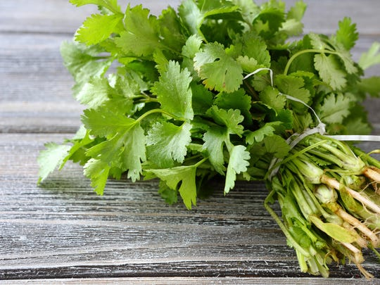 Cilantro is what we typically refer to as the leaves of the coriander plant.