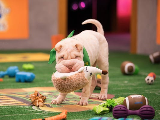 A dog day afternoon at 'Puppy Bowl XIV'