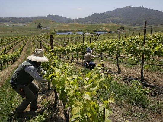 Climate Change Wine Blues