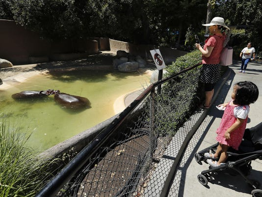 Video of hippo spanking at L.A. Zoo sparks LAPD investigation