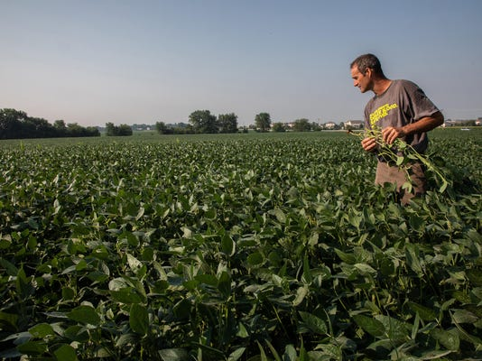 In soybean country, Trump's trade war with China tests patience and nerves