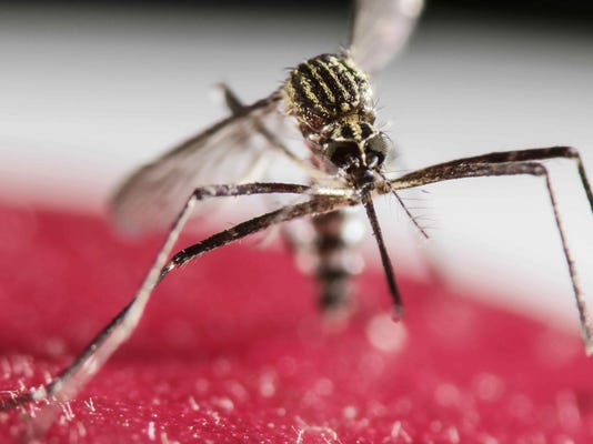 5 Zika cases in Miami Beach; CDC advises pregnant women to stay away