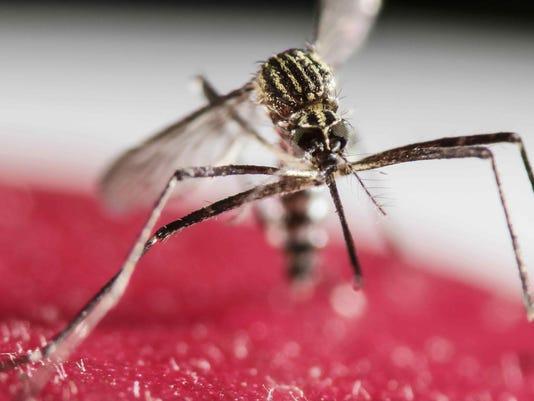 5 Zika cases in Miami Beach; CDC advises pregnant women to stay away