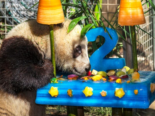 Giant Panda Cub Birth_Hord.jpg
