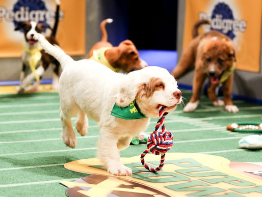 From Puppy Bowl to overtime, Super Bowl fun for the whole family