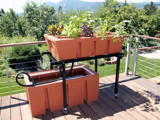 An AquaUrban Sleek Aquaponics System on the deck of a private home in Boulder, Colo., that is attractive, easy to assemble and designed to take a second growing bed. Nearly all fresh fish that thrive in captivity can be used for aquaponic gardening.