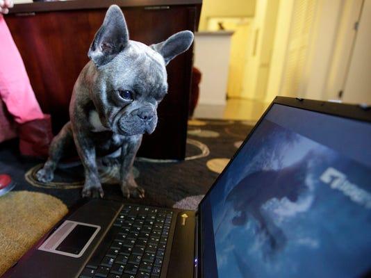 Pets Dog TV Music_Atki.jpg