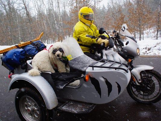 Pets-Sidecar Dogs_Atki.jpg