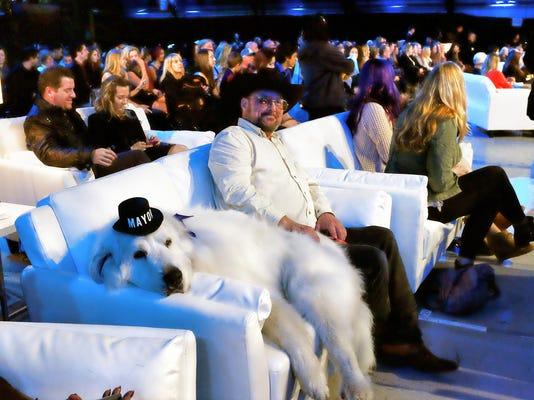 Pets World Dog Awards_Atki.jpg