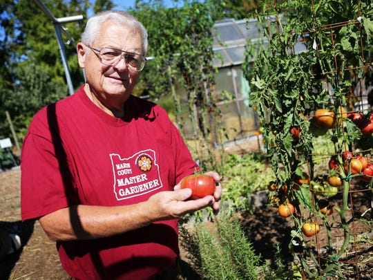 A Cherokee Purple tomato. Master gardener Harry Olson volunteers at Oregon Garden by tending to an edible garden plot filled with tomatoes, watermelons, eggplant, rosemary and basil.