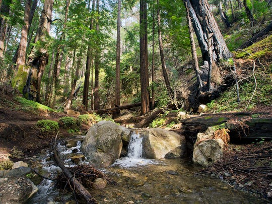 A small stream runs along the start of the Ewoldsen hiking trail at Julia Pfeiffer Burns State Park on Tuesday, Feb. 10, 2015 in Big Sur.