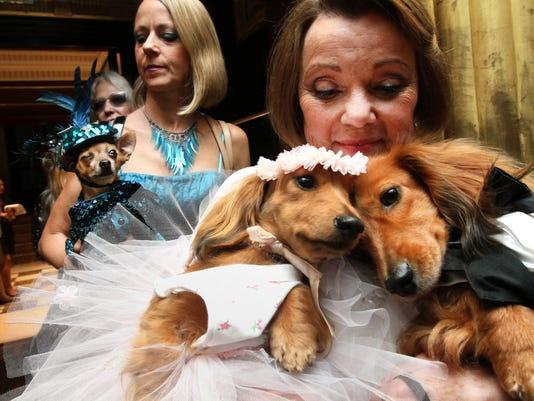Pets Canine Cupid (5)
