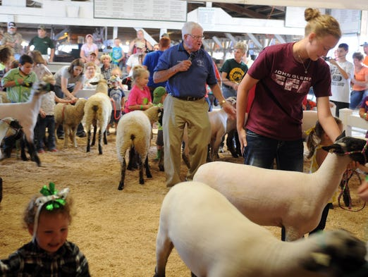 how to show sheep at the fair