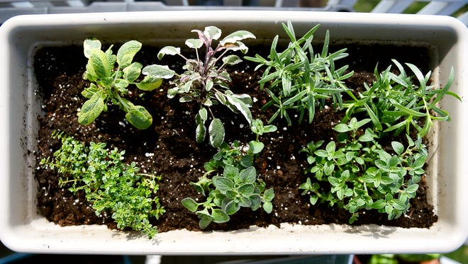Grow your favorite herbs in containers on your balcony or near your windows.