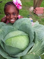 Pictured here is the 2015 New Jersey State Winner, MayLe' Slater of Battle Hill Elementary School in Union, who grew a beautiful huge cabbage (36.4 pounds) and was randomly selected by the New Jersey Department of Agriculture to be our state winner and receive a $1,000 saving bond towards her education from Bonnie Plants.