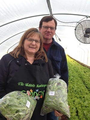Joyce and Bruce Clinger emerge from the greenhouse at The Edible Landscapes, 2255 Shafer Road,with bagged organic salad mix, grown and harvested by hand. Their spring open house will take place from 1 to 4 p.m. March 24 and 25.