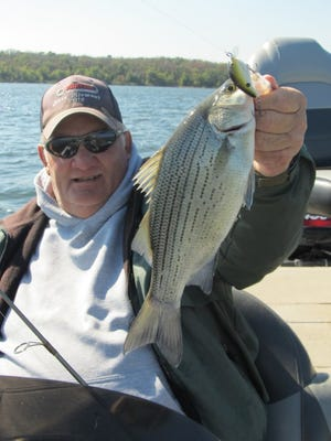 Fishing guide, Les Jarman with a white bass as the annual spawning run of these finny fighters has started.