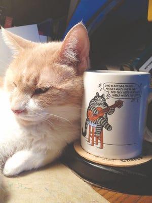 Loyal cat guarding my coffee cup