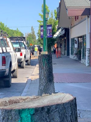 The stumps of trees on Mt. Shasta Boulevard - which had already been scheduled to be replaced by less destructive flowering pear trees - were taken out Tuesday to make way for outdoor seating for restaurants including Sparky's Landing and Pipeline Craft Taps and Kitchen.
