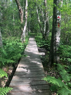 Jenkins Wildlife Sanctuary in West Barnstable has boardwalks to make the trail blazing easier.