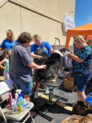 Kristie Carr (middle, blue shirt with apron) and her crew washed over 50 dogs on Saturday.