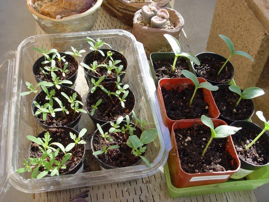 Yardsmart: 6 tips for growing vegetable seeds indoors