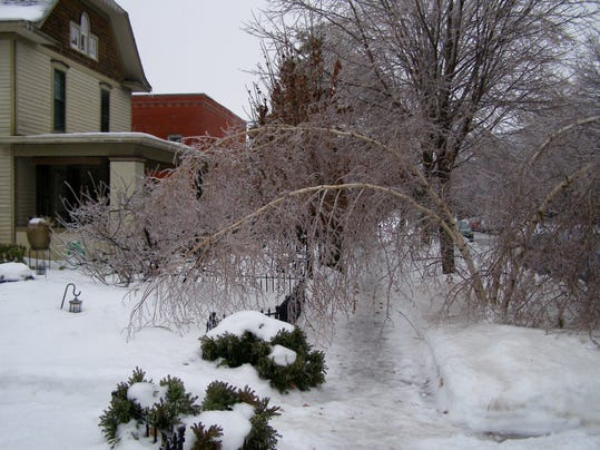 Garener: Preparation and care of trees and shrubs in winter