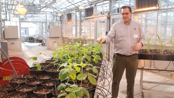 Mike Petersen, who has worked at what is now called the Wisconsin Crop Innovation Center facility for 30 years, stayed with the center after Monsanto donated it to the University of Wisconsin earlier this year. He showed members of the Wisconsin Crop Improvement Association through the labs and greenhouses last week at the annual meeting of the group.