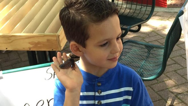 Isaac West holds a Madagascar racing cockroach at the Insectival event Friday at Arkansas State University.
