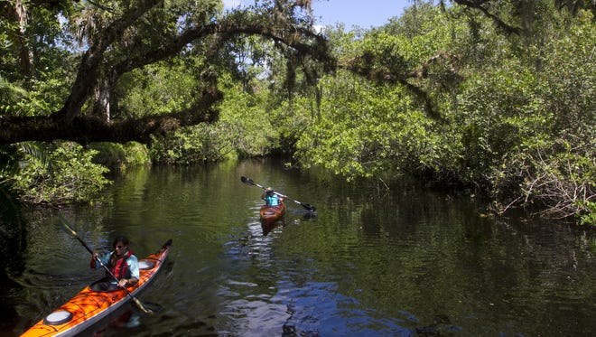 Brandy Minchew of the College of Life Foundation leads John Sutton of London, England, on a short kayak tour of the Estero River at the Koreshan State Historic Site on Wednesday.