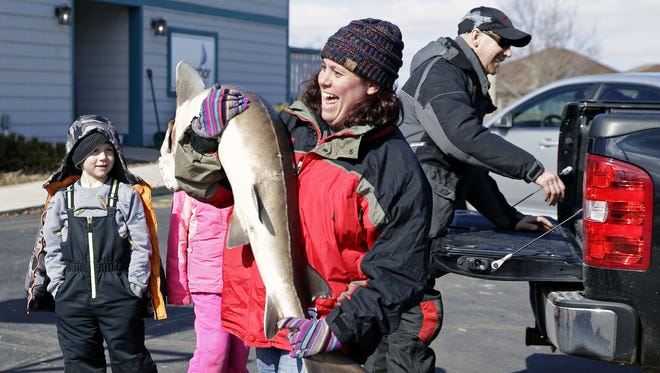 Melissa Meyer, of Chilton, carries in her sturgeon as Keith Hanke prepares to unload his catch Saturday, February 24, 2018, in Stockbridge, Wis. The spearing season comes to a close this weekend on Lake Winnebago.