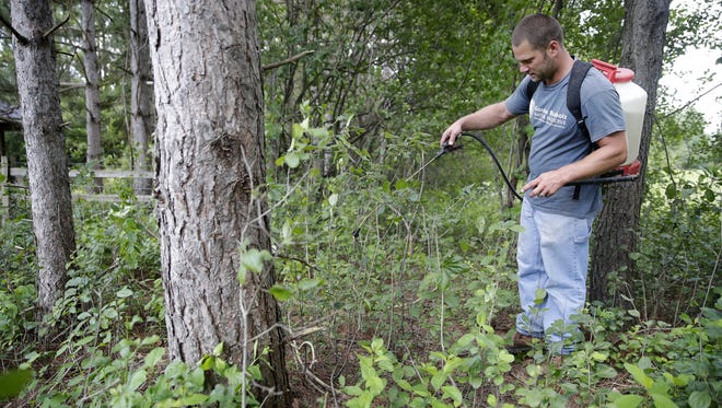 Dave Skiba, the property manager at Gordon Bubolz Nature Preserve, sprays to kill Buckthorn, an invasive species in the preserve, on Tuesday in Grand Chute.