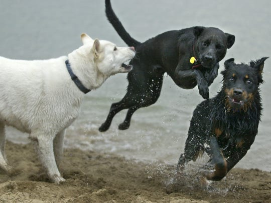 Dogs play at the Sparks Marina Dog Park in 2003.