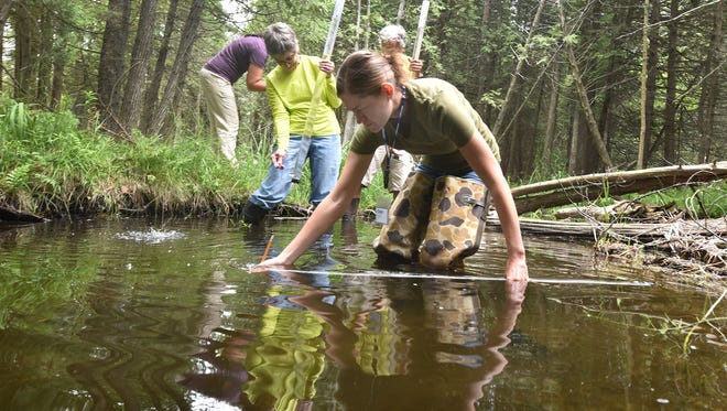 Door County Agriculture Agent Annie Deutsch helps in the sampling of Hidden Brook inside The Ridges Sanctuary, Baileys Harbor, on Tuesday, July 12, 2016. Volunteers were learning Level I Water Action Volunteering (WAV) to aid in monthly monitoring of creeks in Door County through the extension.