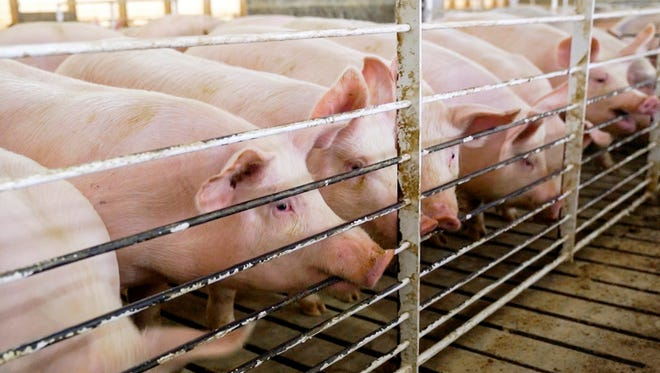 Tyson Foods is suing a federal agency for $2.4 million, saying it had to destroy 8,000 carcasses because a federal meat inspector lied about checking hogs at a plant in Iowa.